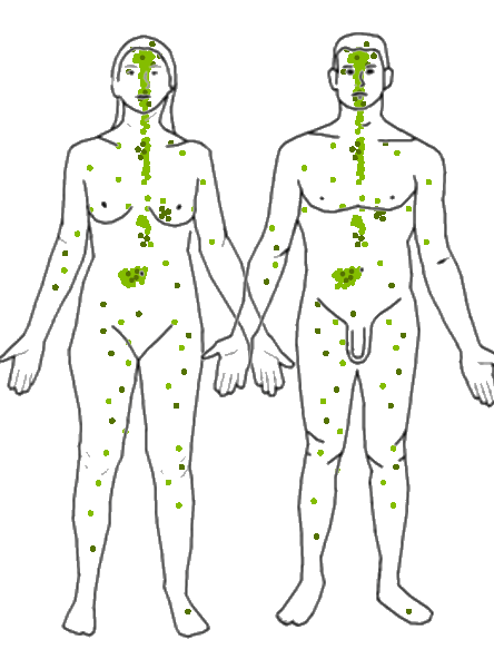 Endocannabinoid System And Cannabis 2